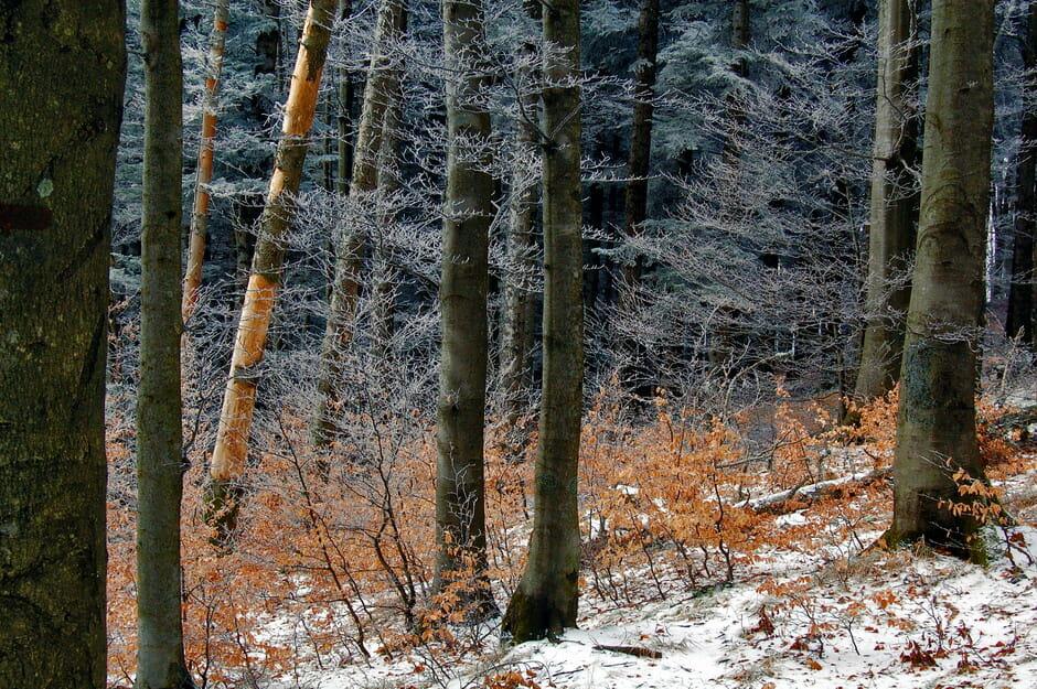 Foresta profonda