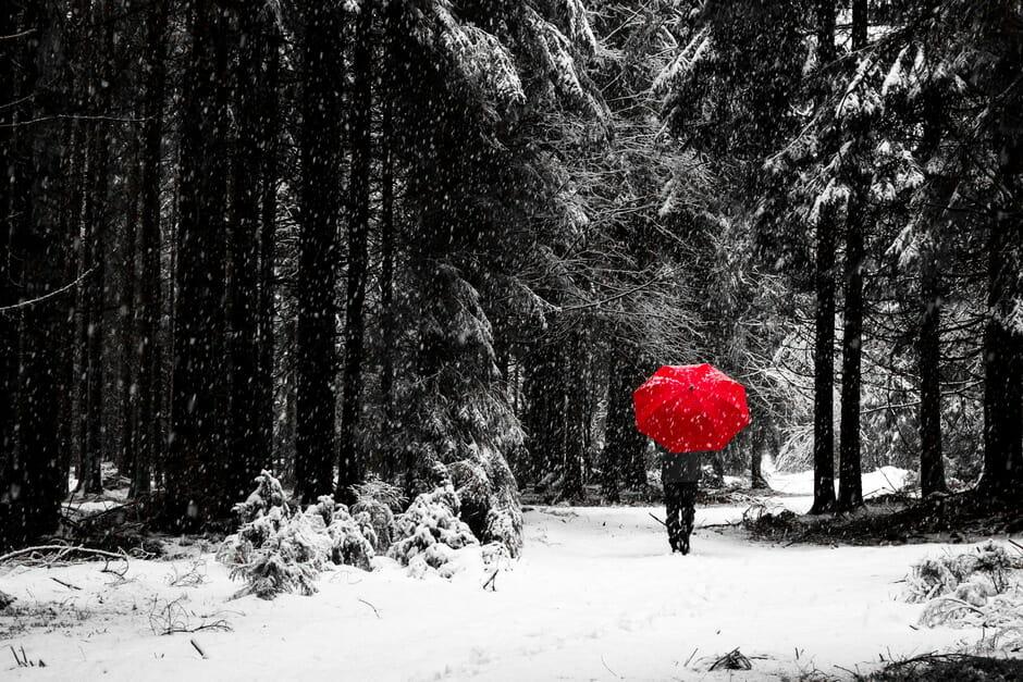 Camminando nel bosco sotto la neve