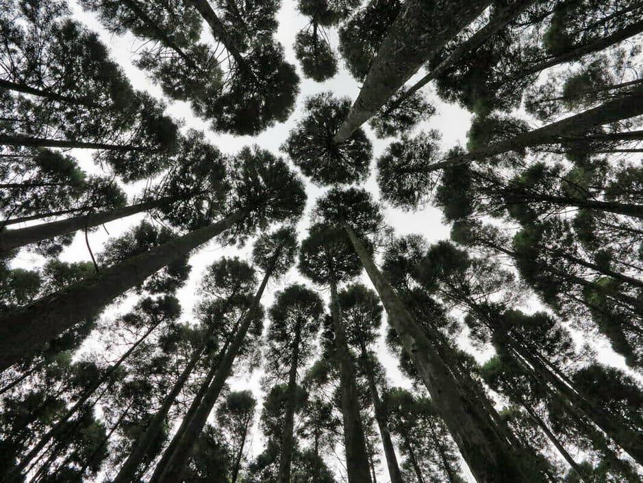 Mukabaki forest