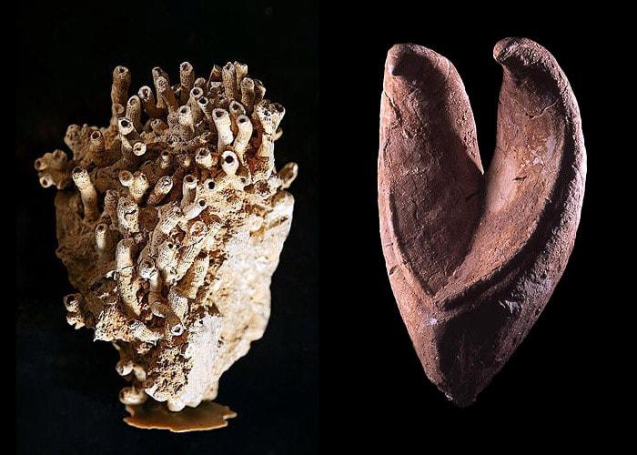 Fossili delle Dolomiti