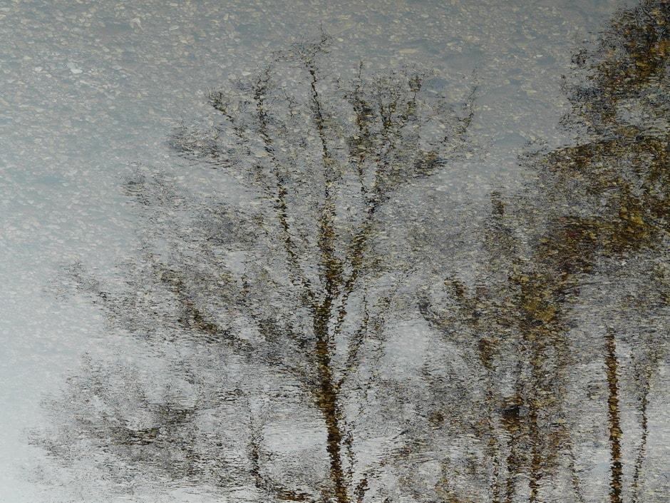 Impressionismo di un albero - di Alessandra Cavedon - Malo (VI)